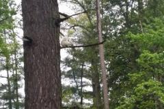 White Squirrel (Credit, Katie Lipsius)