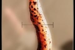 Slug (Credit, Brandi Smith)